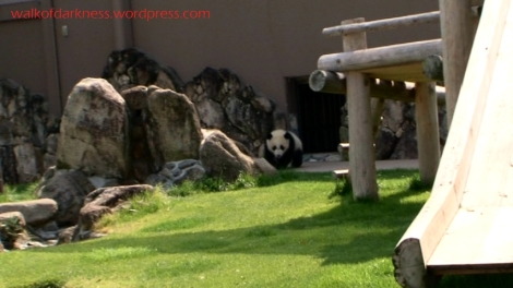 shirokuma_cafe_bonus_zoo_trip_dvd_screencap_baby_panda_01