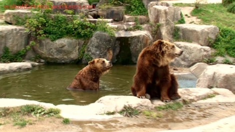 shirokuma_cafe_bonus_zoo_trip_dvd_screencap_group_safari_ride_brown_bears_01
