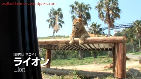 shirokuma_cafe_bonus_zoo_trip_dvd_screencap_group_safari_ride_lions_02