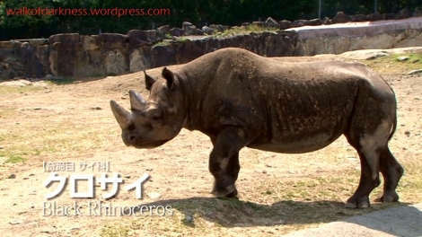 shirokuma_cafe_bonus_zoo_trip_dvd_screencap_group_safari_ride_rhinoceros