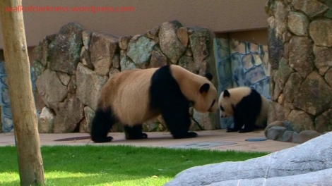 shirokuma_cafe_bonus_zoo_trip_dvd_screencap_mama_and_baby_panda_01