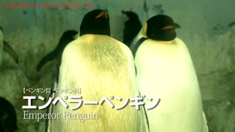 shirokuma_cafe_bonus_zoo_trip_dvd_screencap_sea_world_emperor_penguins