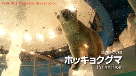 shirokuma_cafe_bonus_zoo_trip_dvd_screencap_sea_world_polar_bear